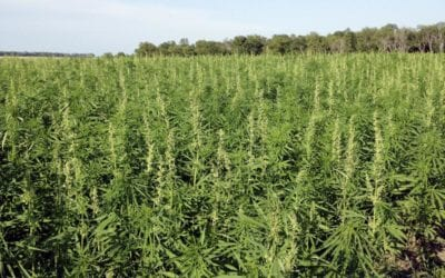 Growers, hemp advocates waiting impatiently for ag permits with passage of Nebraska bill -June 2019