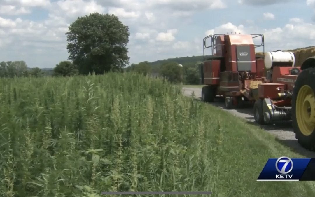 """HEMP HOPEFULS CALL STATE'S 2019 RESEARCH PLAN A """"SLAP IN THE FACE"""" -published July 2019"""