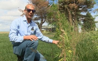 Hemp may be legal, but advocates still find many barriers – September 2019