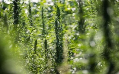 Speakers tell of economic benefits of hemp production in Nebraska – February 2020