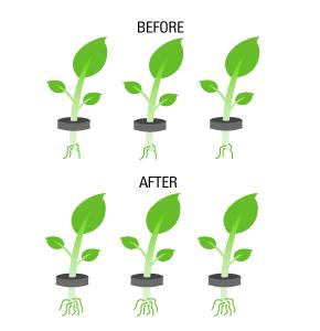 Leaf | Hemp Harvest Works | Plant | Flower | Botany | Plant Stem